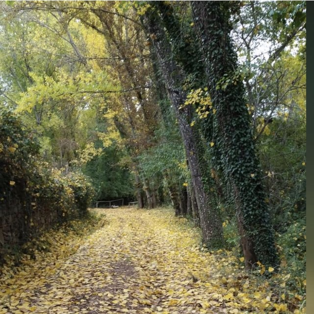 camino que se adentra en el bosque con hojas caídas de grandes árboles en otoño